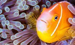 Día Mundial de los Océanos  – 8 de junio